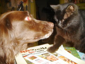 Cat pointing something out to dog